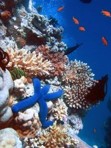 terumbu-karang-225x300